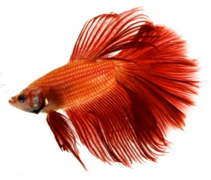 Names of Pet Fish of Male Pet Fish Names