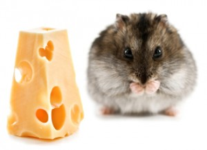 hamster names cheese 2